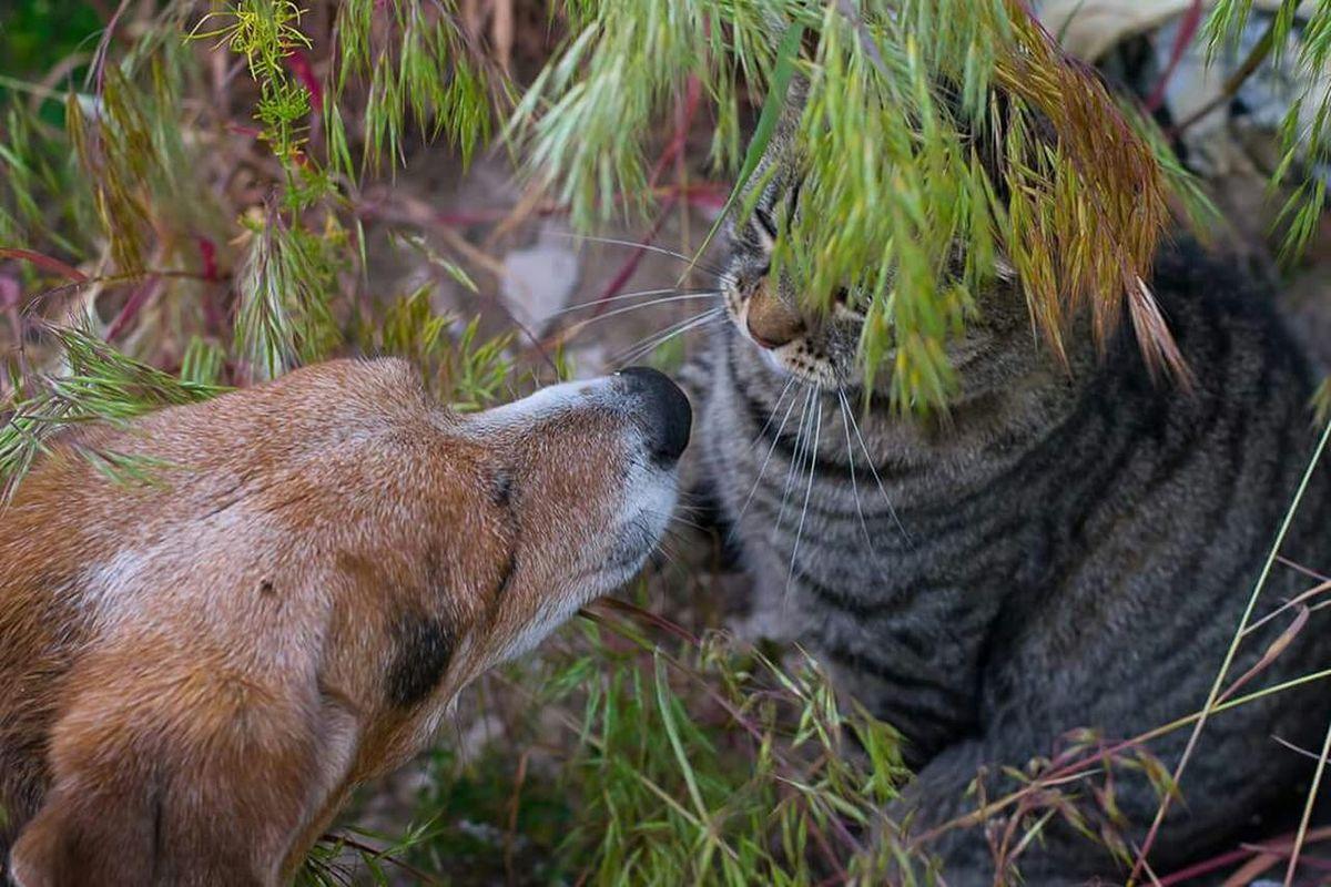 Hello! :-) Dog Cat Playmates Playmates At Play Friends Cute Pets Pets