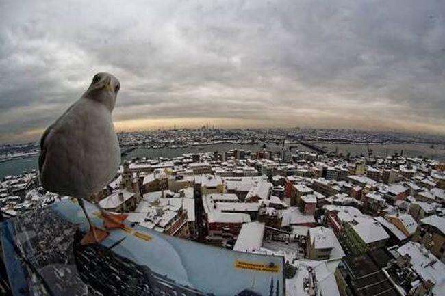 Learn & Shoot: After Dark Cute Bird🐥 Istanbul Turkey Sea Photography Martı Livingston Martı Jonathan Eyes Bird