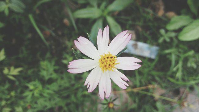 ดอกไม้ สีชมพู สดใส ฟรุ้งฟริ้ง 🌼🌻🌸🍀🍁🍂 Natural Folwers