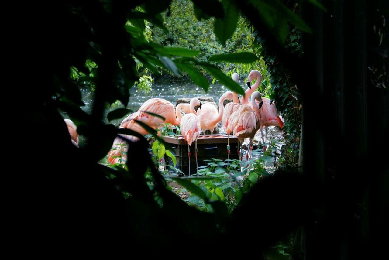 Pink Flamingos On Lake Seeing Through Tree