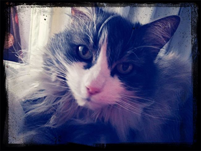 Mi hermosa gata Miniña