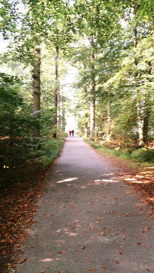 Hanging Out Taking Photos Check This Out Walking Woods Belgium