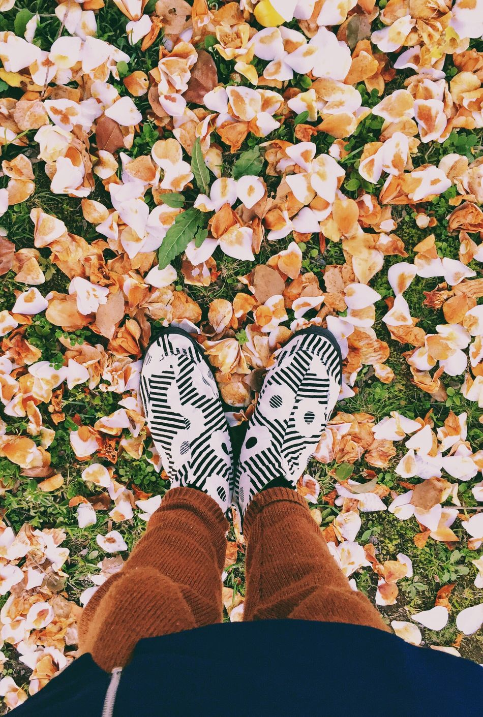 Low Section Leaf Standing Human Leg Canvas Shoe Shoe Personal Perspective Day Outdoors Mobilephotography VSCO Eyem Best Shots