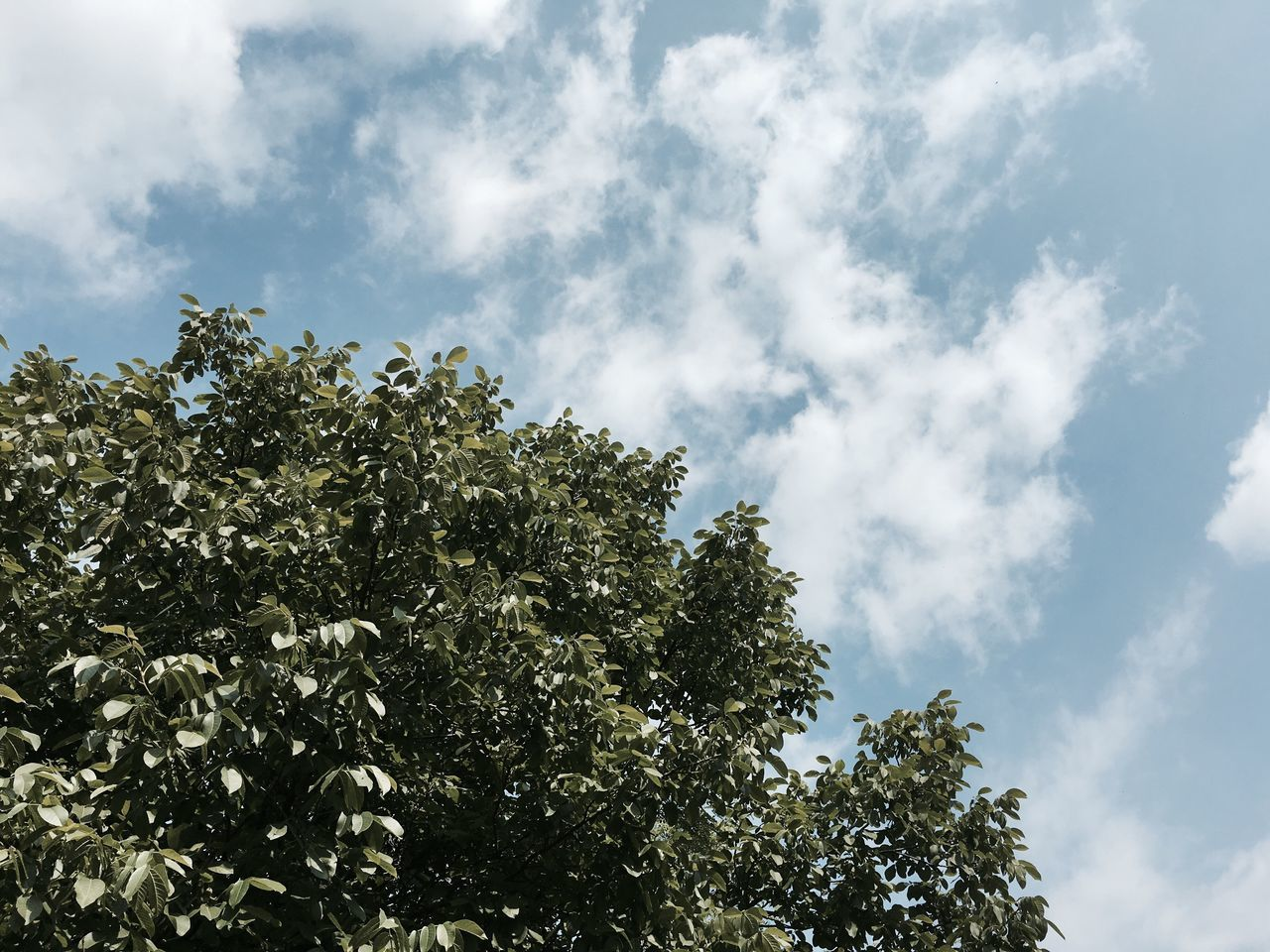 Low Angle View Sky Tree Nature Growth Beauty In Nature Cloud - Sky No People Day Outdoors Scenics