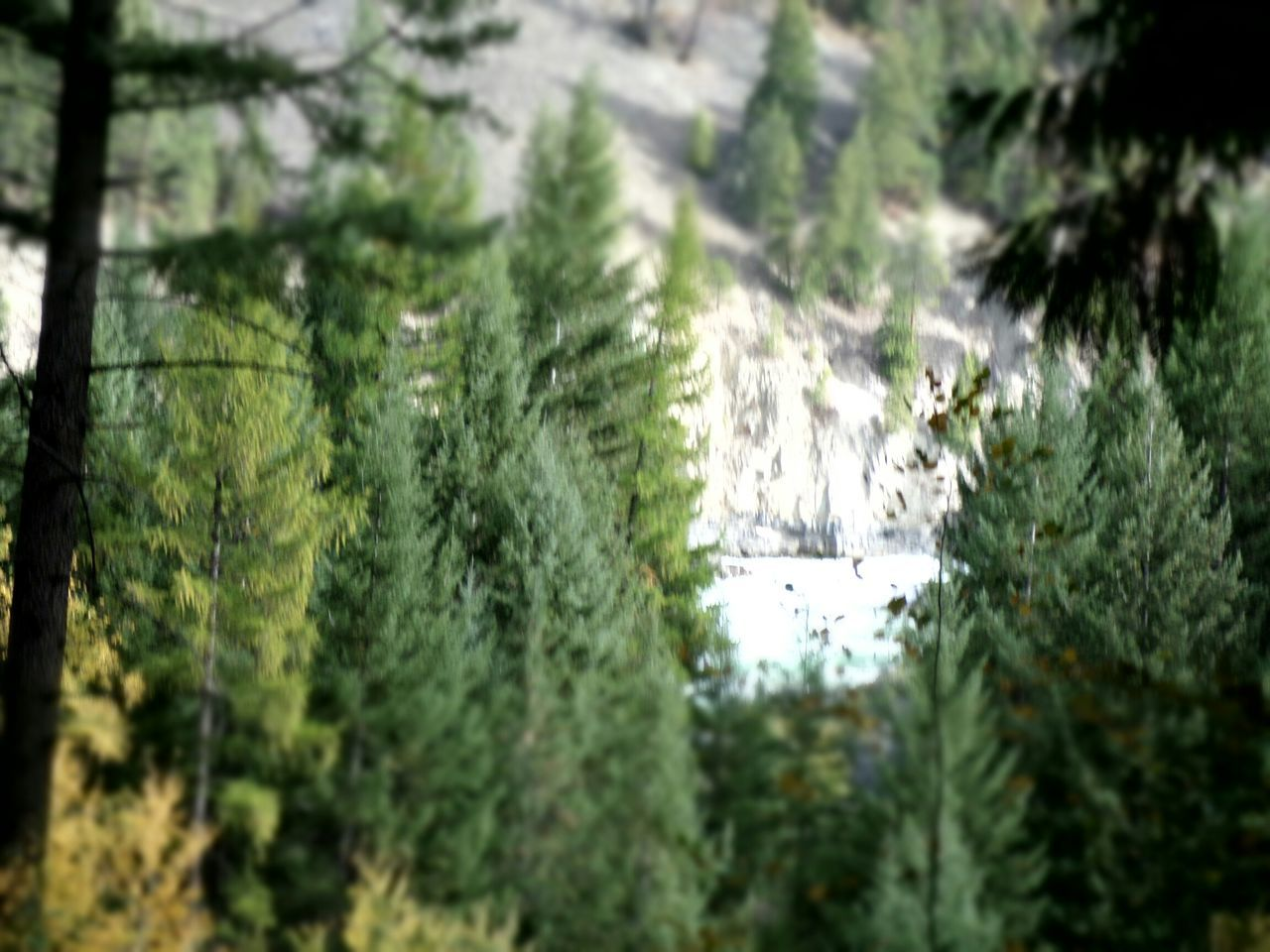 Thru The Trees On A Cliff Kootenay Falls