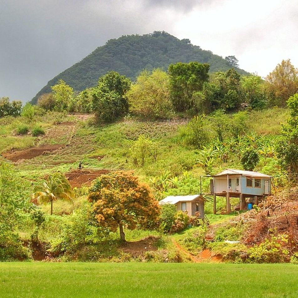 Grenada Ilivewhereyouvacation Livefunner GrandÉtang Crater Volcano Natureshots Nature Westindies_pictures Westindies_people Wu_caribbean Ig_caribbean_sea Ig_caribbean_ca66 Islandlivity Ig_caribbean Islandlife Awesomecapture Amazing_allshots Bushments Bush