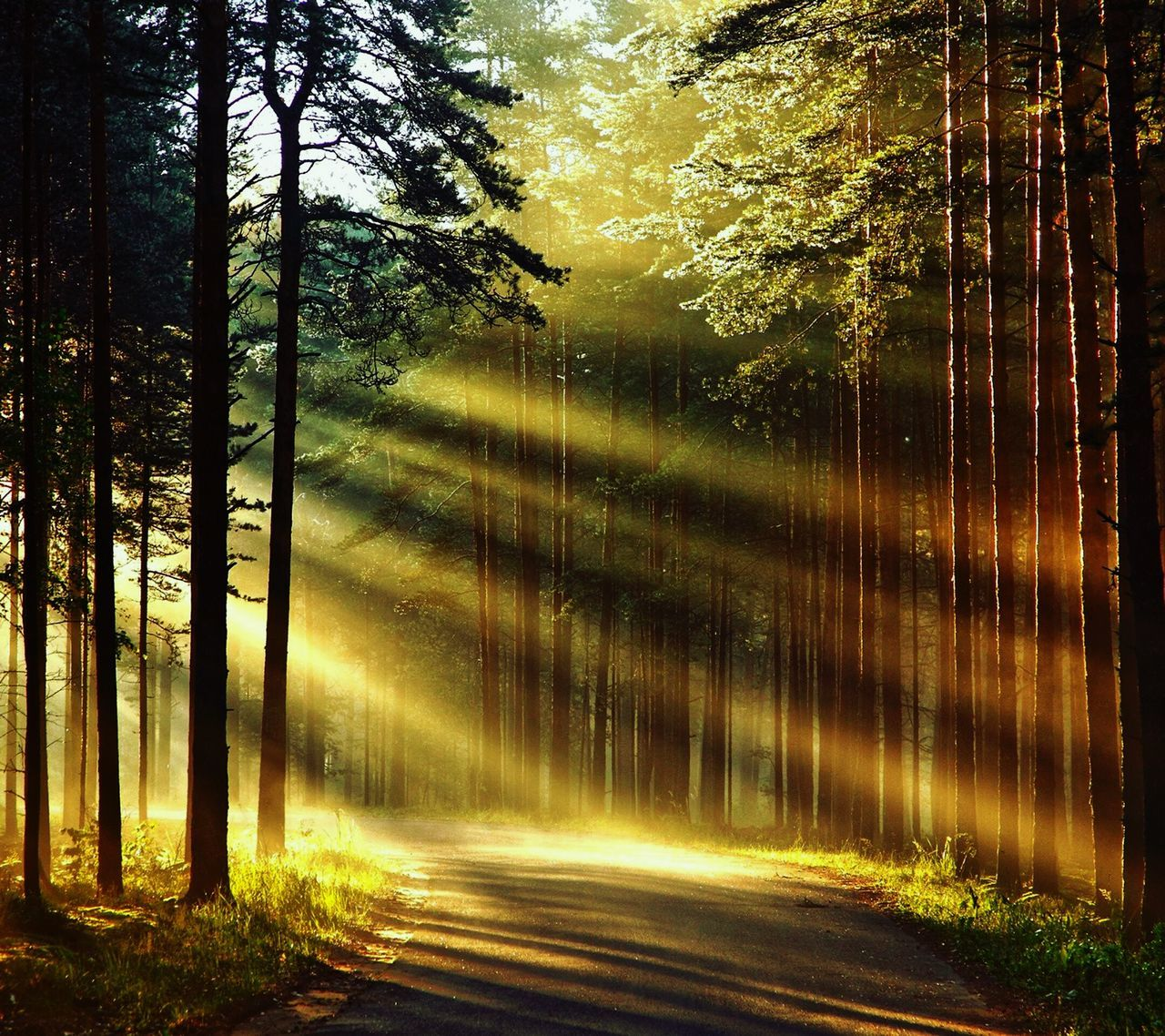 Tree Nature Sunlight No People Tranquility Beauty In Nature Outdoors Scenics Forest Tranquil Scene Sky Day