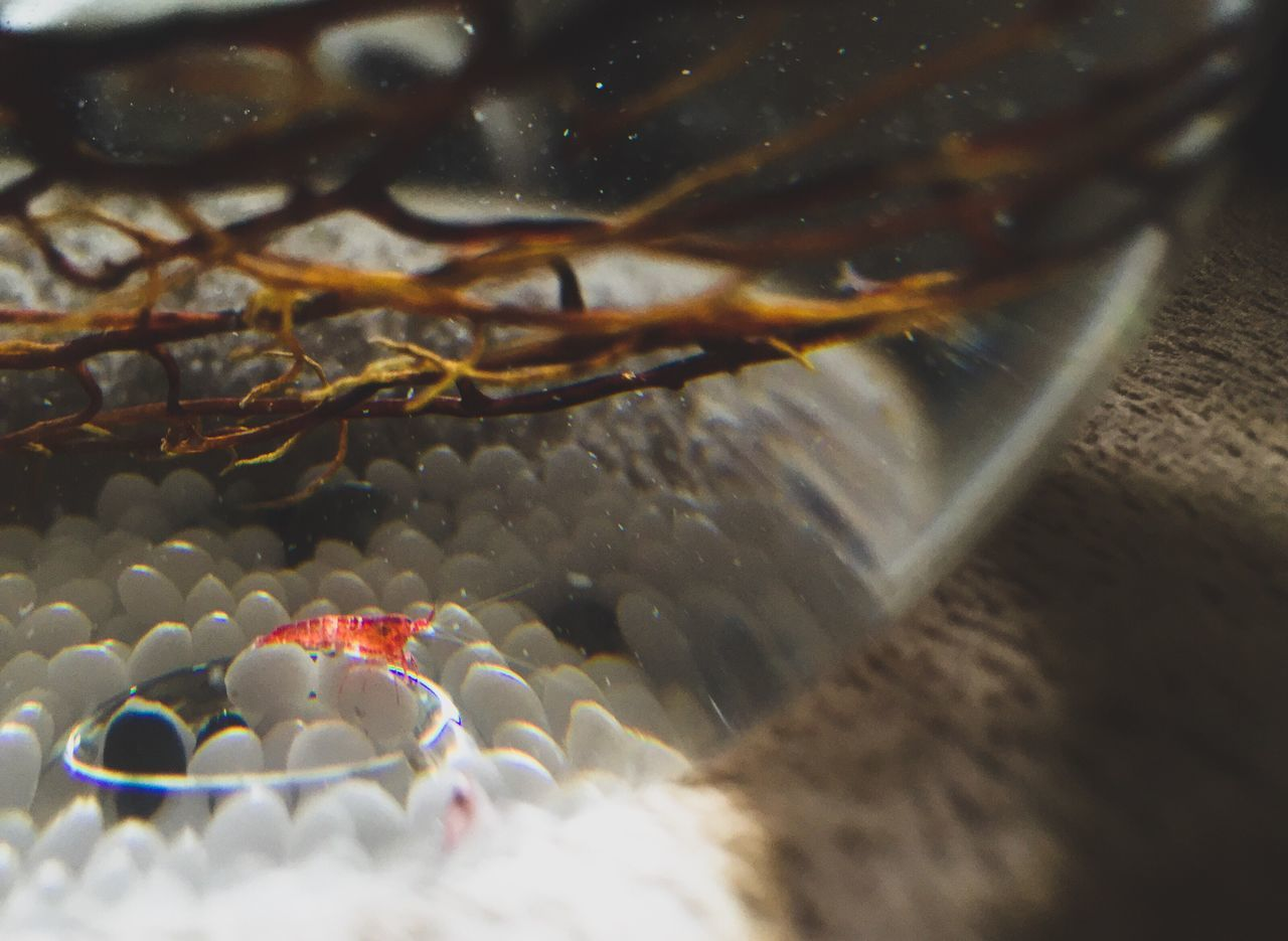 Red Shrimp Ecosphere Beautiful Enclosed Glass