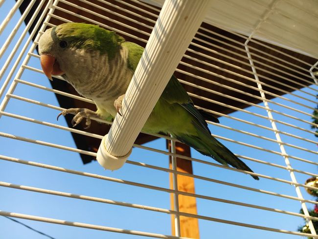 Love MyLove❤ Parrot Green Good Morning Sun Winter Green Green Green!  Myparrot Passion Love #live #cute #igdaily #pinquote #life #passion #together #forever