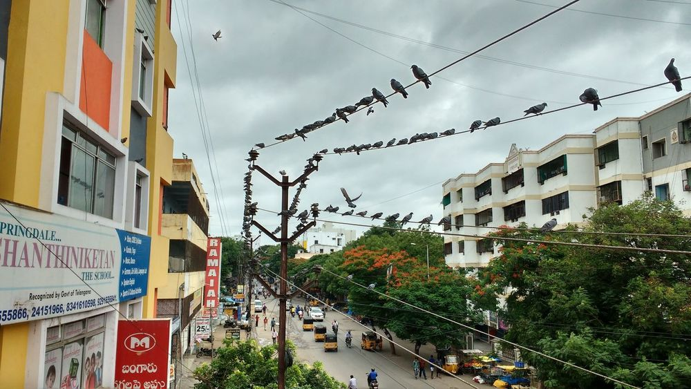 Adapted To The City Cloud - Sky City Multi Colored Nature Day Outdoors Sky Tree Architecture Taking Photos Enjoying Life Hanging Out Evening Light Birds Bird Photography Birdstagram Communications Assembly Point Que