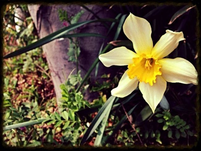 Whispers Of Spring Flowers For My Friends Yellow