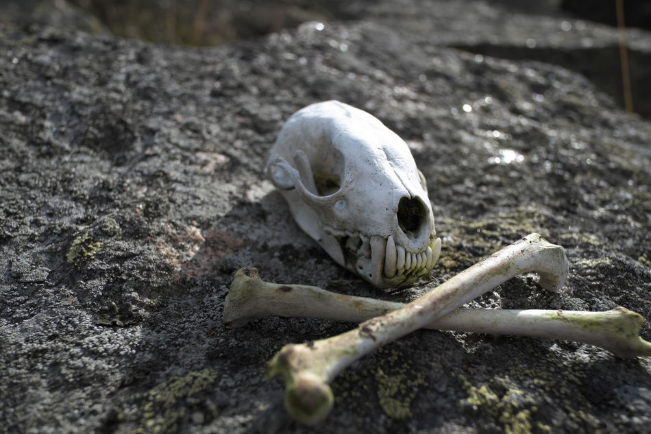 Beautiful stock photos of skull, Barriers, Bones, Contrasts, Control