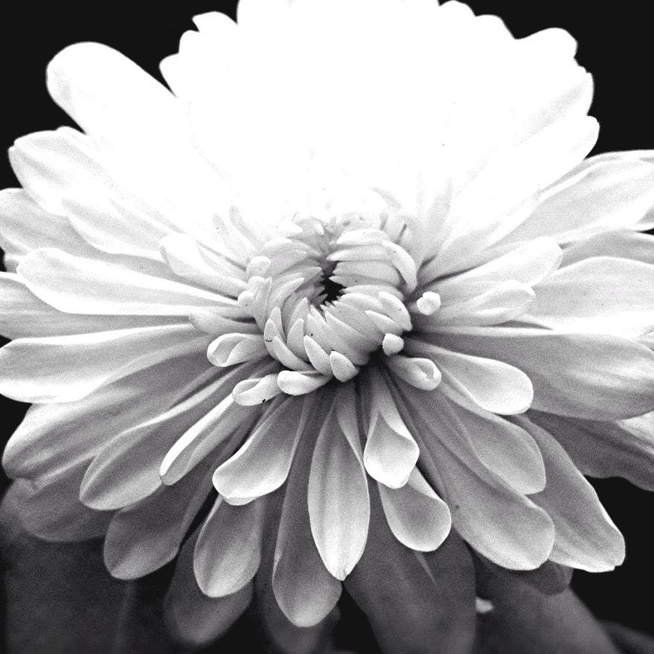 Black & White, Popular