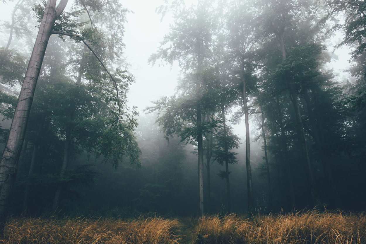 Beauty In Nature Day Fog Forest Growth Landscape Nature No People Outdoors Rennsteig Scenics Sky Thueringen Thueringer Wald Tranquility Tree