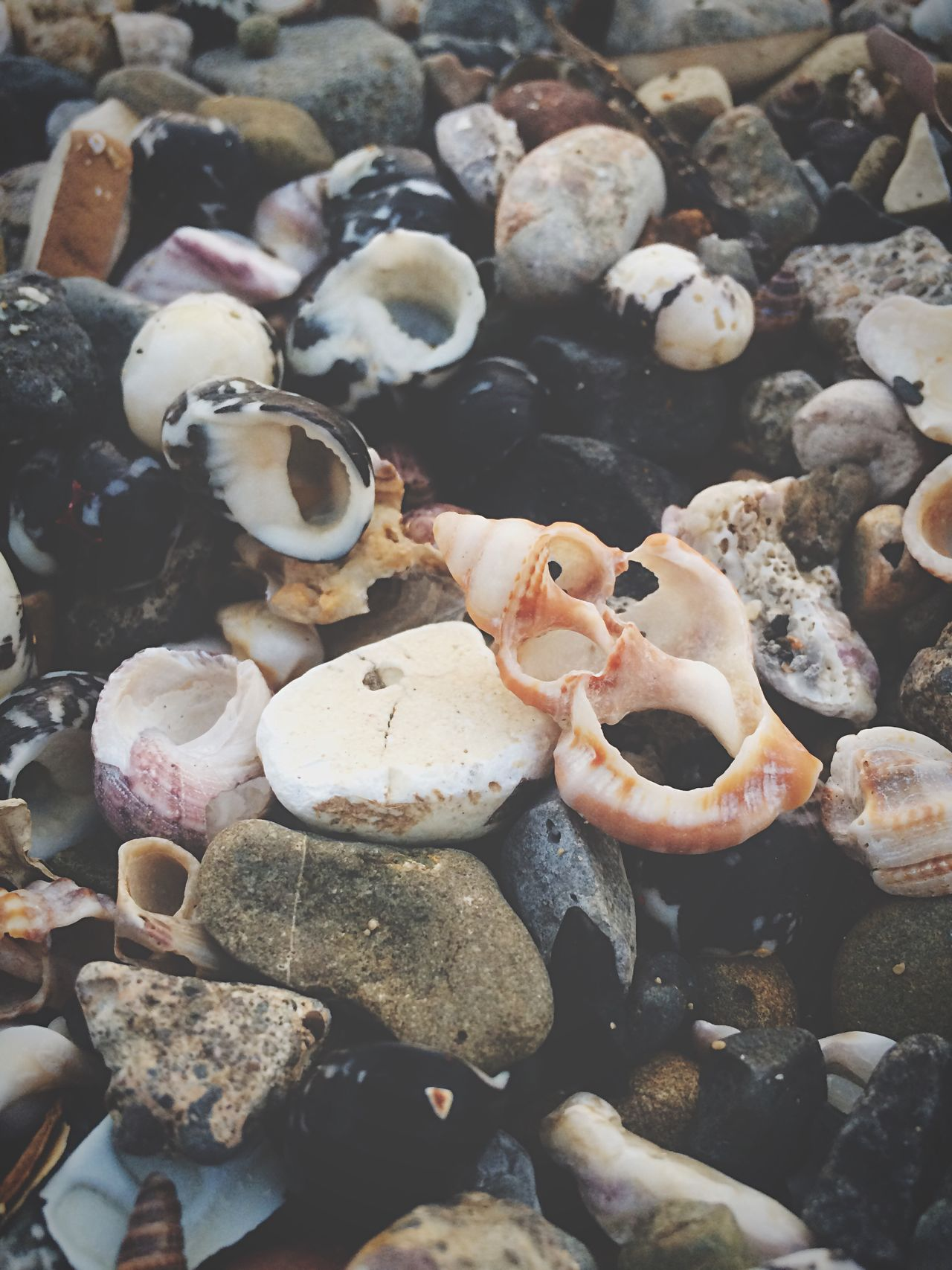 Life under. Shells Beach Rocks Stones Closeup Photooftheday Photography Mumbai India Placesinindia Natgeo Nature Broken Cracked