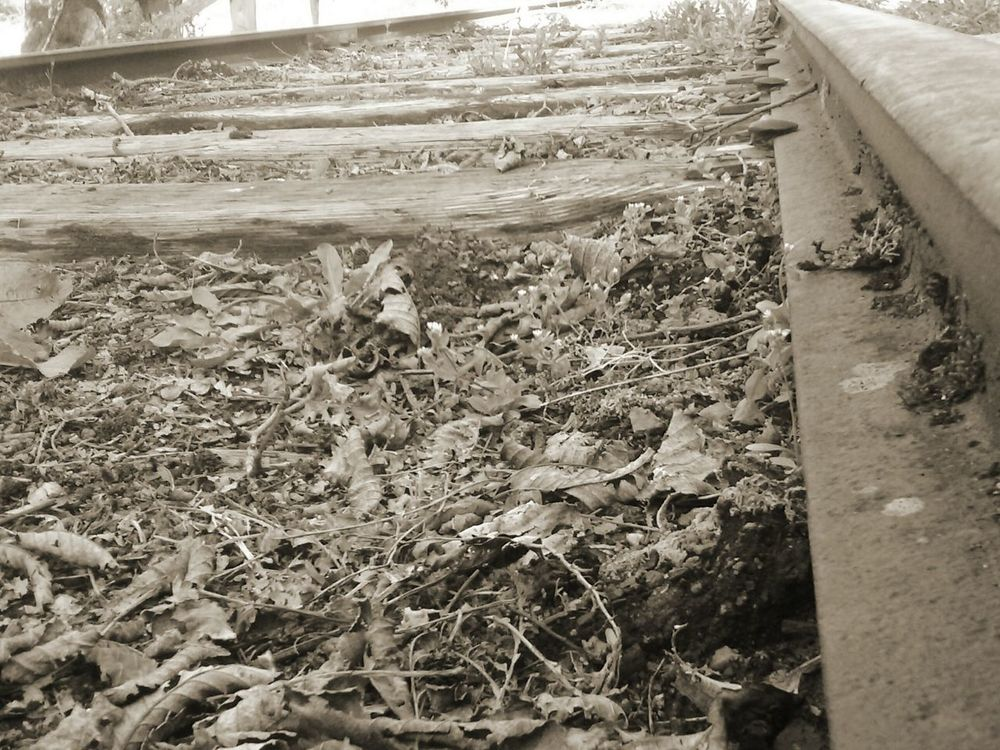 Day No People Outdoors Nature Close-up Coal Mining History Low Angle View Nature Rail Transportation Beauty In Nature Field Scenics Tranquility Wood - Material Built Structure