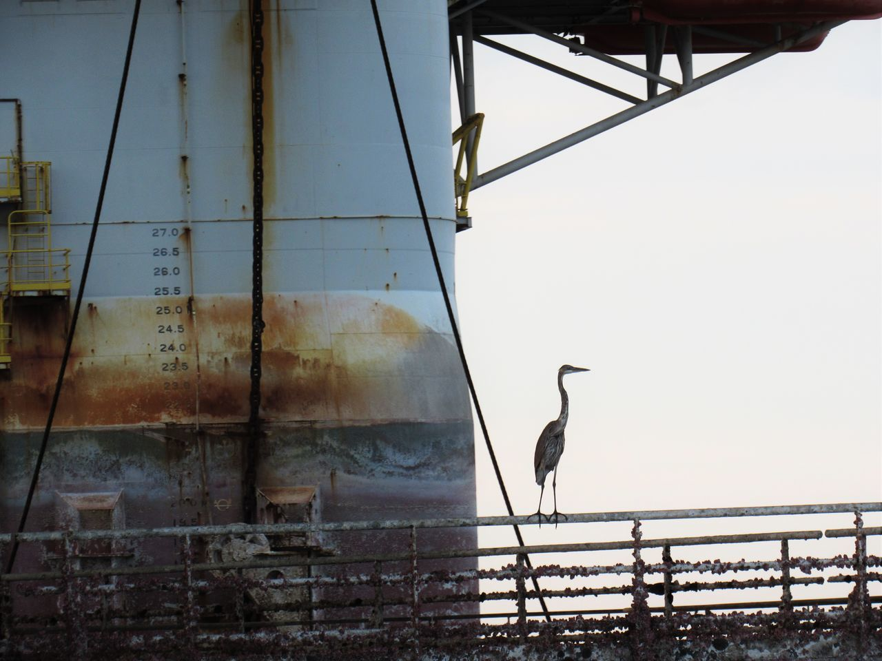 Blue Heron Animal Themes Animals In The Wild Bird Branch Calm Day Metal Nature No People Oil Rig In Background One Animal Outdoors Perching Sea Sky Standing Water Tranquility Walkway Water Waterfront Adapted To The City