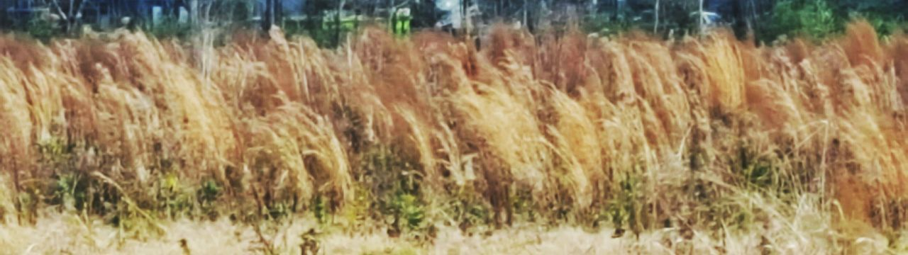 Nature No People Outdoors Growth Grass Full Frame South Louisiana Landscape Beauty In Nature Grasses Grassfield