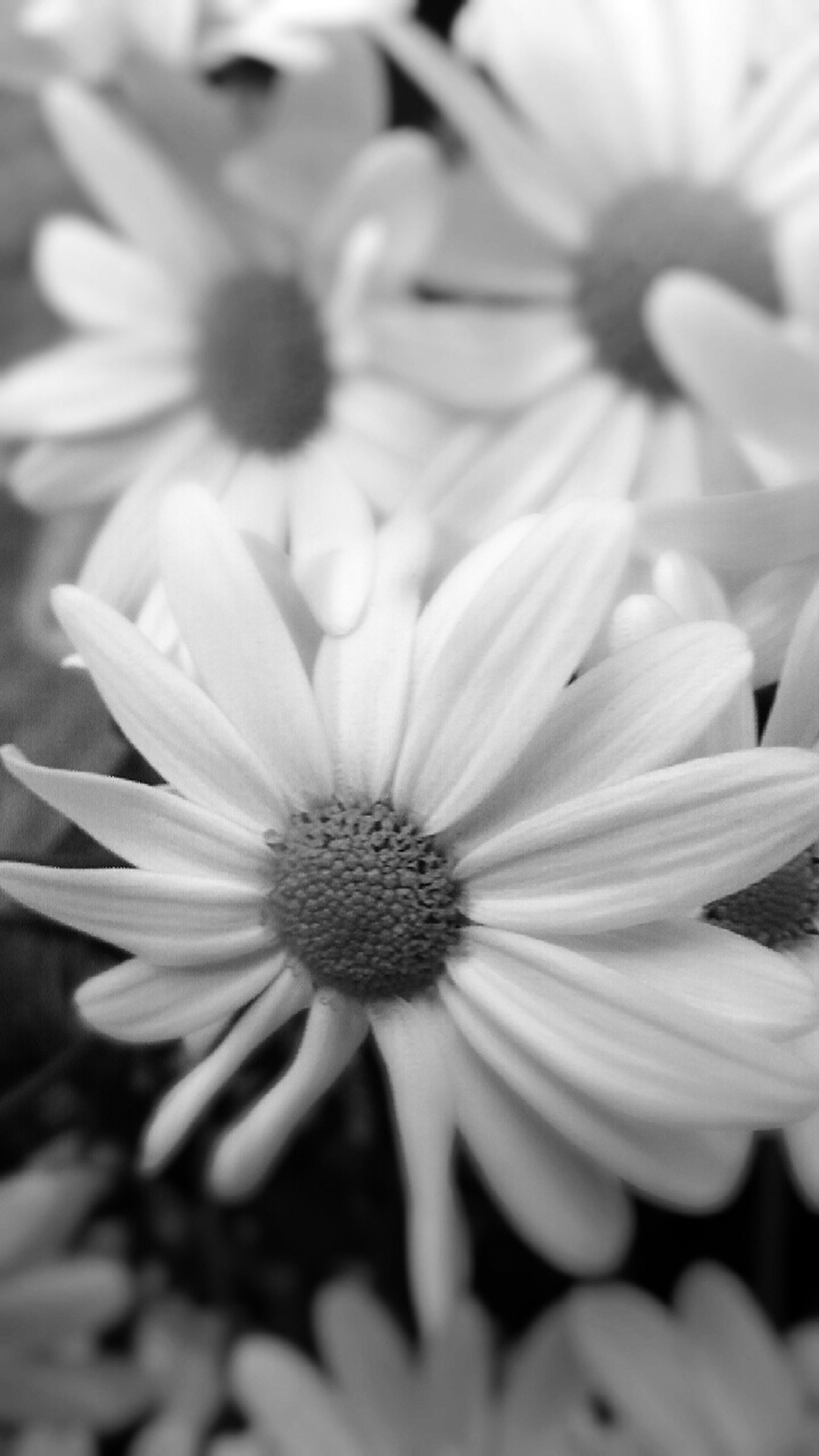 flower, petal, freshness, flower head, fragility, growth, beauty in nature, pollen, close-up, blooming, nature, daisy, focus on foreground, plant, in bloom, single flower, selective focus, stamen, white color, yellow