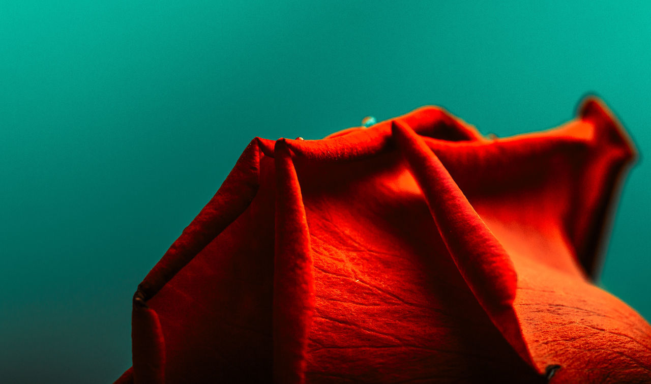Abstract Close-up Complementary Colors Flower Green Leafes Macro No People Part Of Pattern Red Rose - Flower Structure Surface Texture