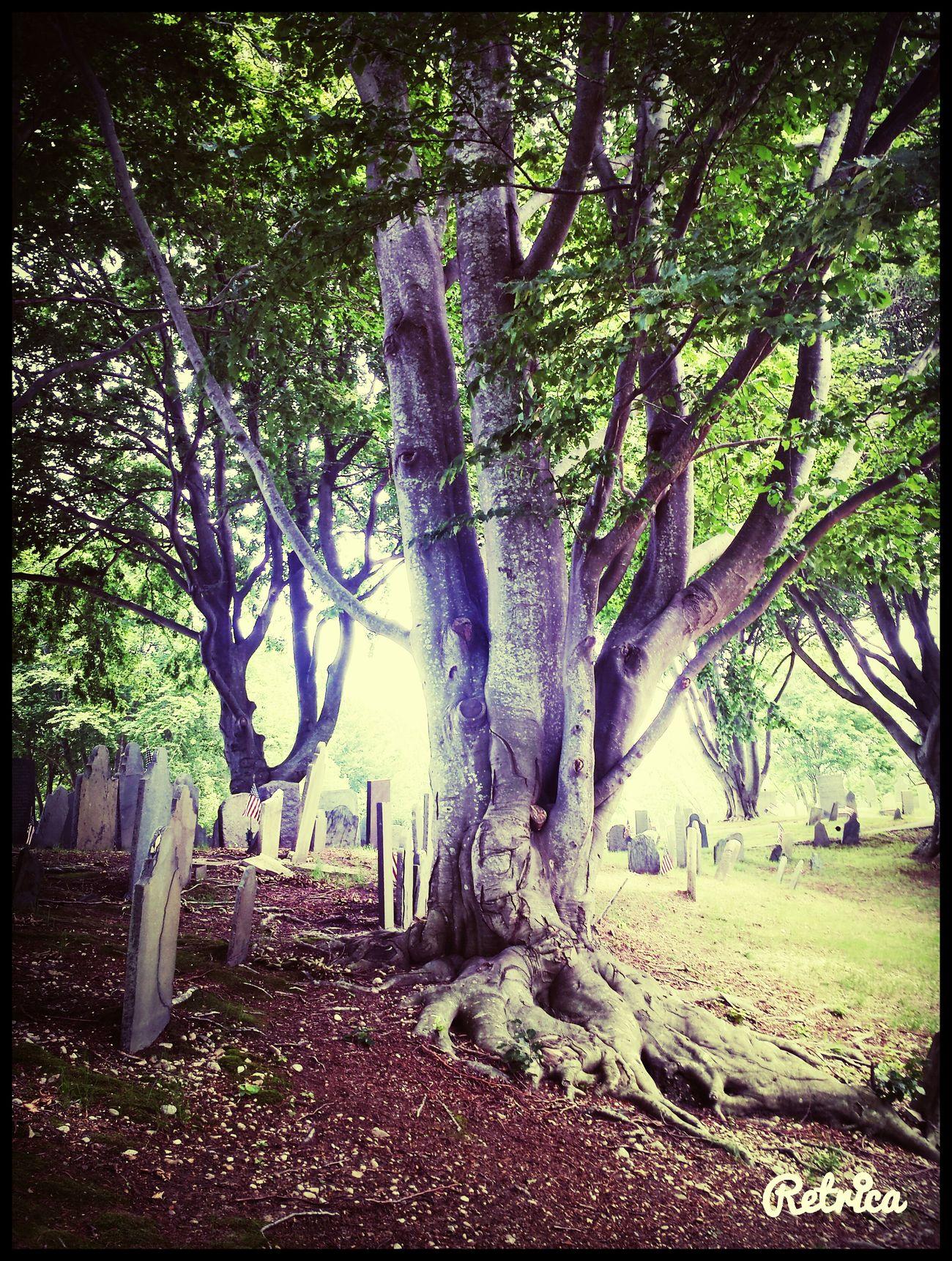 Burial Hill Graveyard Beauty