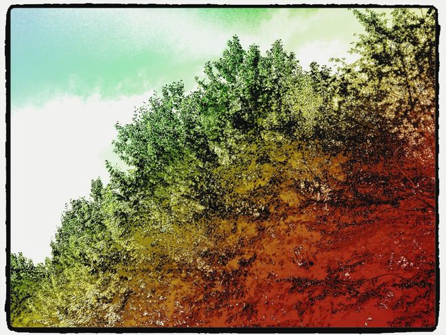Hello World Look Up Trees For The Love Of Trees ~ Lifestyle Perfect Imbalance Be Inspired Colorful