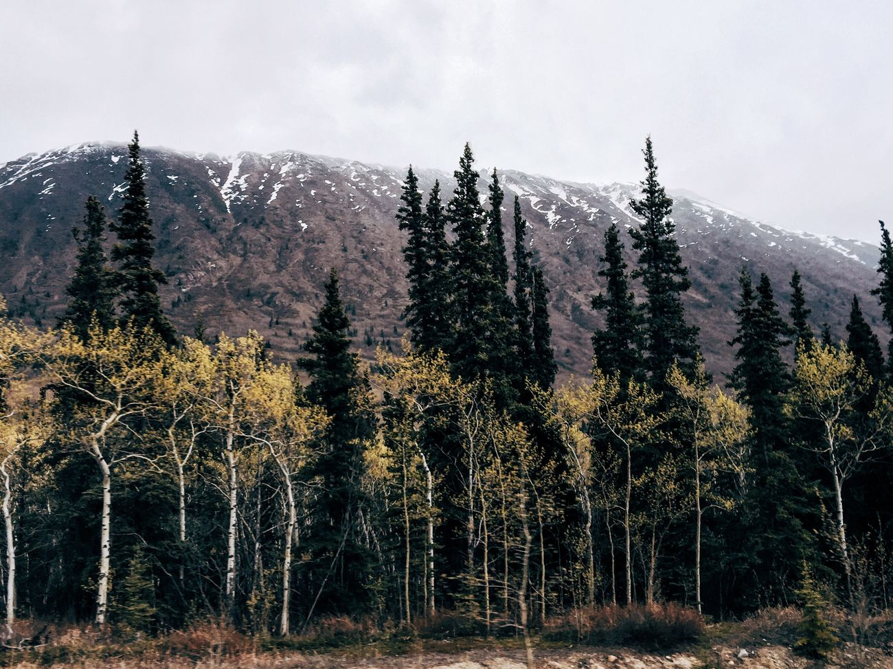 Nature's Diversities Yukon Whitehorse Canada The Photojournalist - 2016 EyeEm Awards Trees Forest Fog Explore Mountains Nature Wanderlust Tranquility Peaceful Eyeem Philippines Eyeem Canada Feel The Journey Original Experiences