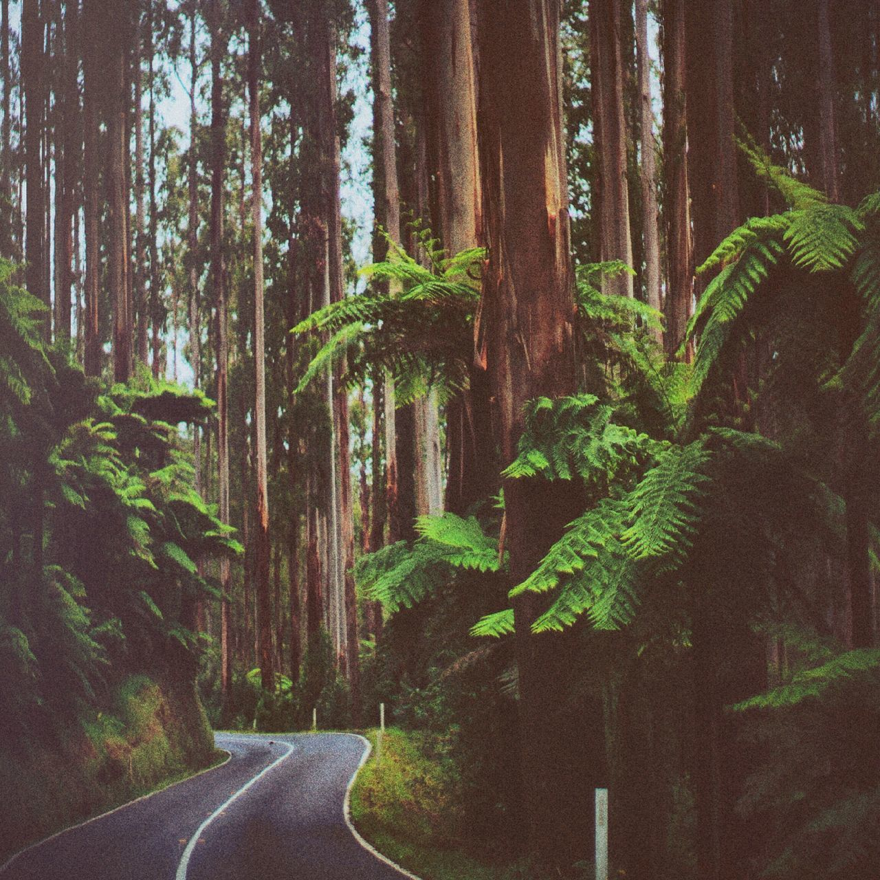 Beautiful stock photos of rainforest, Beauty In Nature, Country Road, Curve, Day