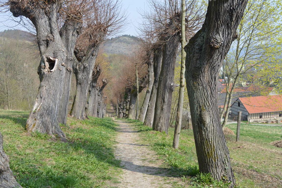 Frühling Old Trees Sandweg Springtime Way