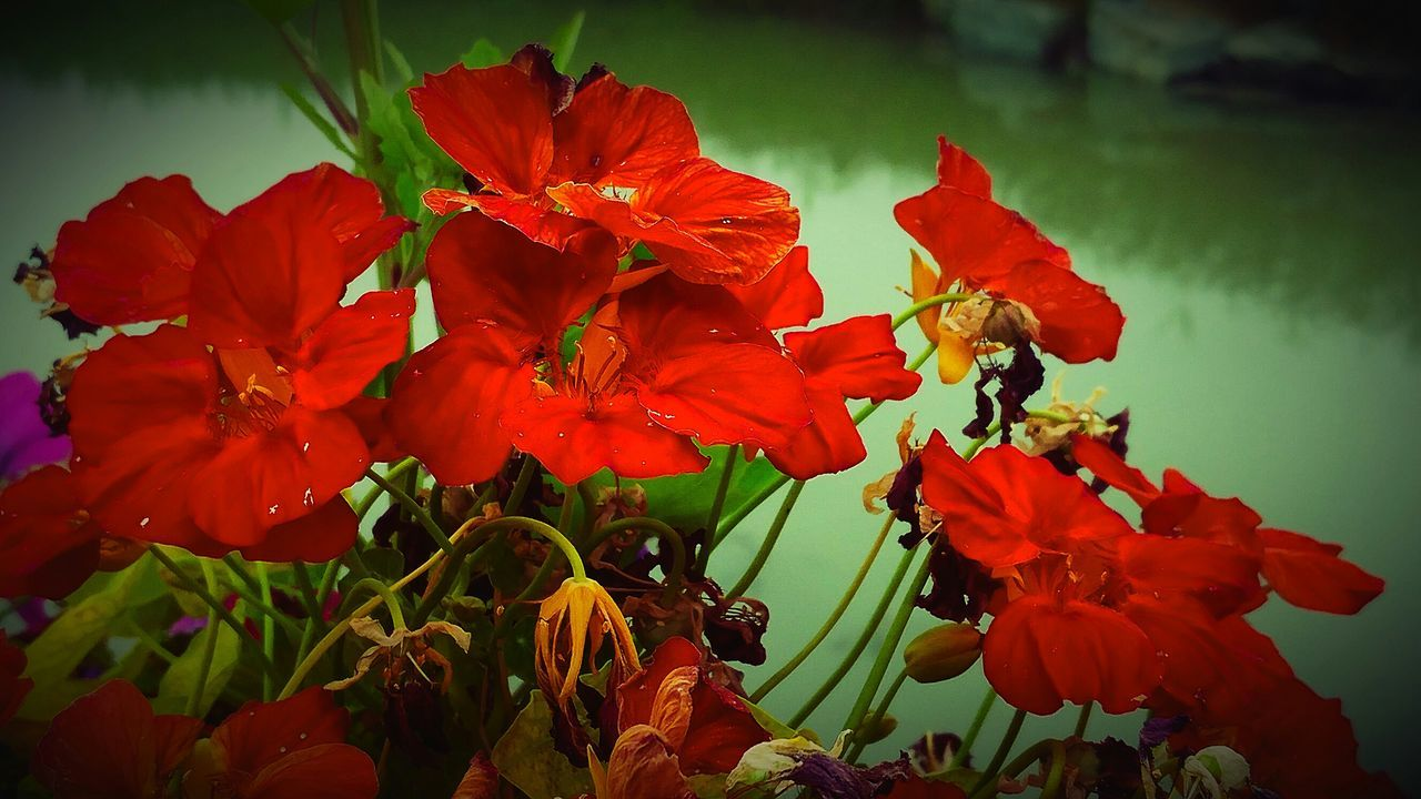 Flower And Pond Contrast In Nature Flowers, Nature And Beauty Natural Beauty Flowerlovers Freshness Beautiful View