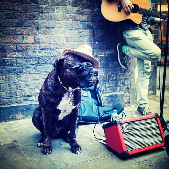 Get yer blues on. Streetphotography Dogs London A Fleeting Minute In London