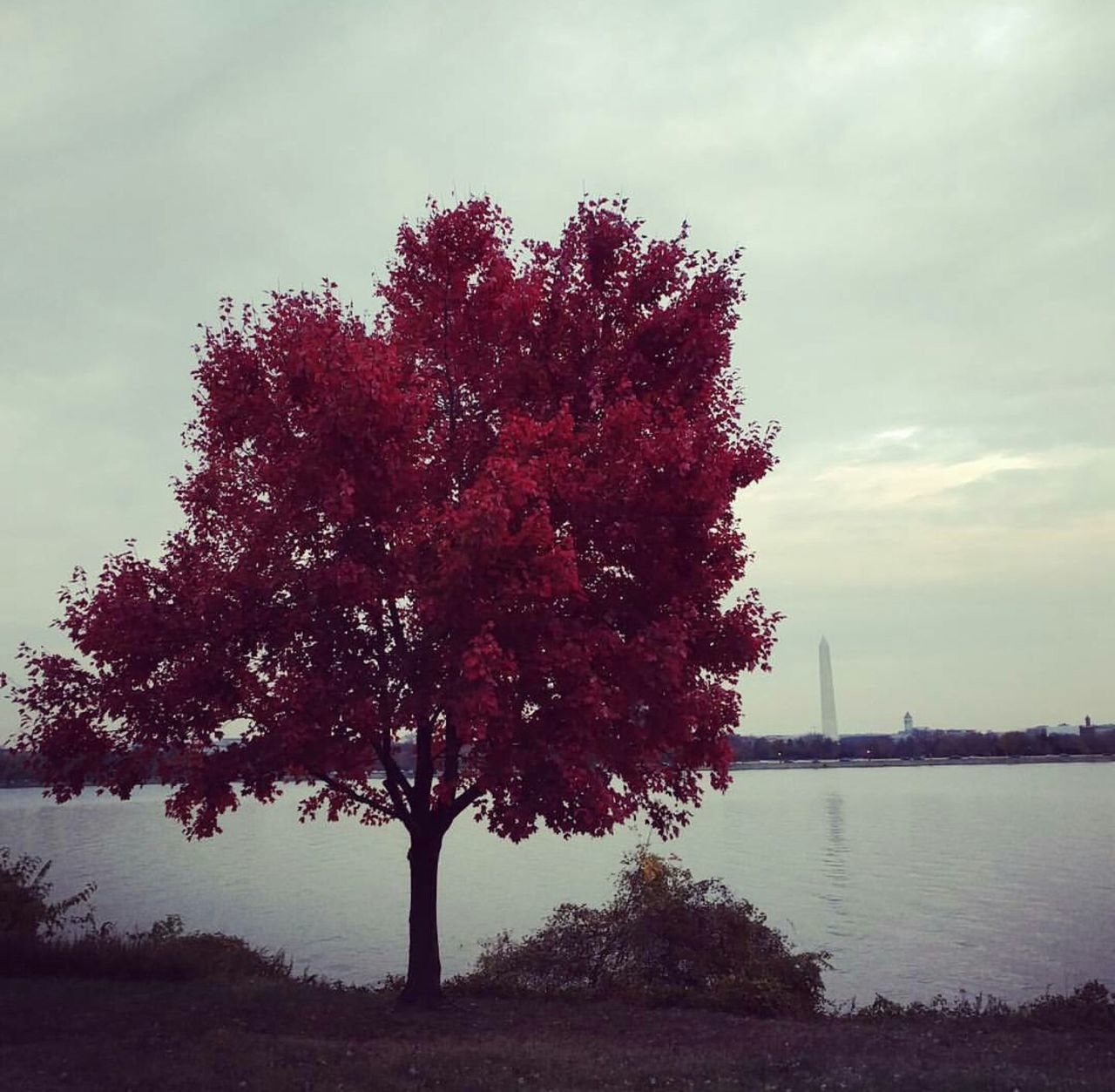 Red Sky Nature No People Outdoors Tree President Monuments Washington, D. C. Lincoln Memorial Washington Monument