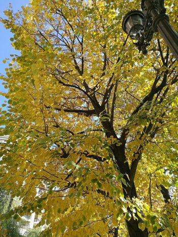 Low Angle View Yellow Tree Branch Beauty In Nature Sky Outdoors Nature Autumn Autumn Leaves Sunshine Warm November
