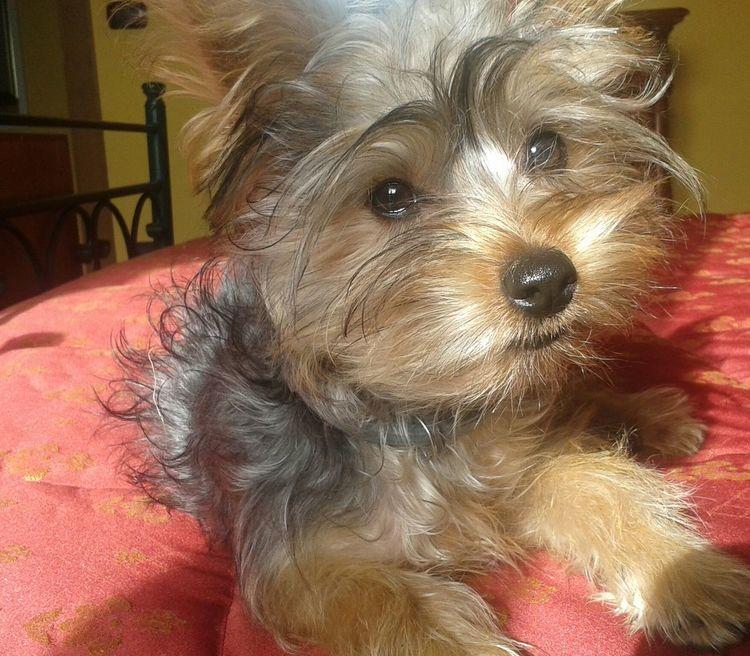 ♡♡♡ Sweet♡ Sweet Moments Animal Themes Pets Domestic Animals Dog @i-Charlie