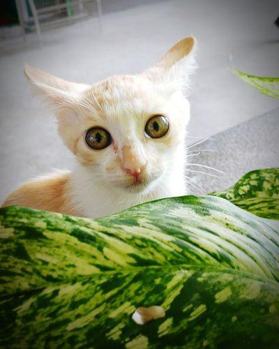 Whether human or canine, eyes can talk a lot..! E.g. Innocence and curiosity in these kitty's eyes. Innocence InnocenceOfCanine InnocenceOfAnimals InnocenceOfCat Curious Kitty Curious Cat Littlekitty Cutekitty Lookintomyeyes MesmerisingEyes CharmingInnocence CharmingEyes Pets Domestic Cat Feline Domestic Animals Portrait Animal One Animal
