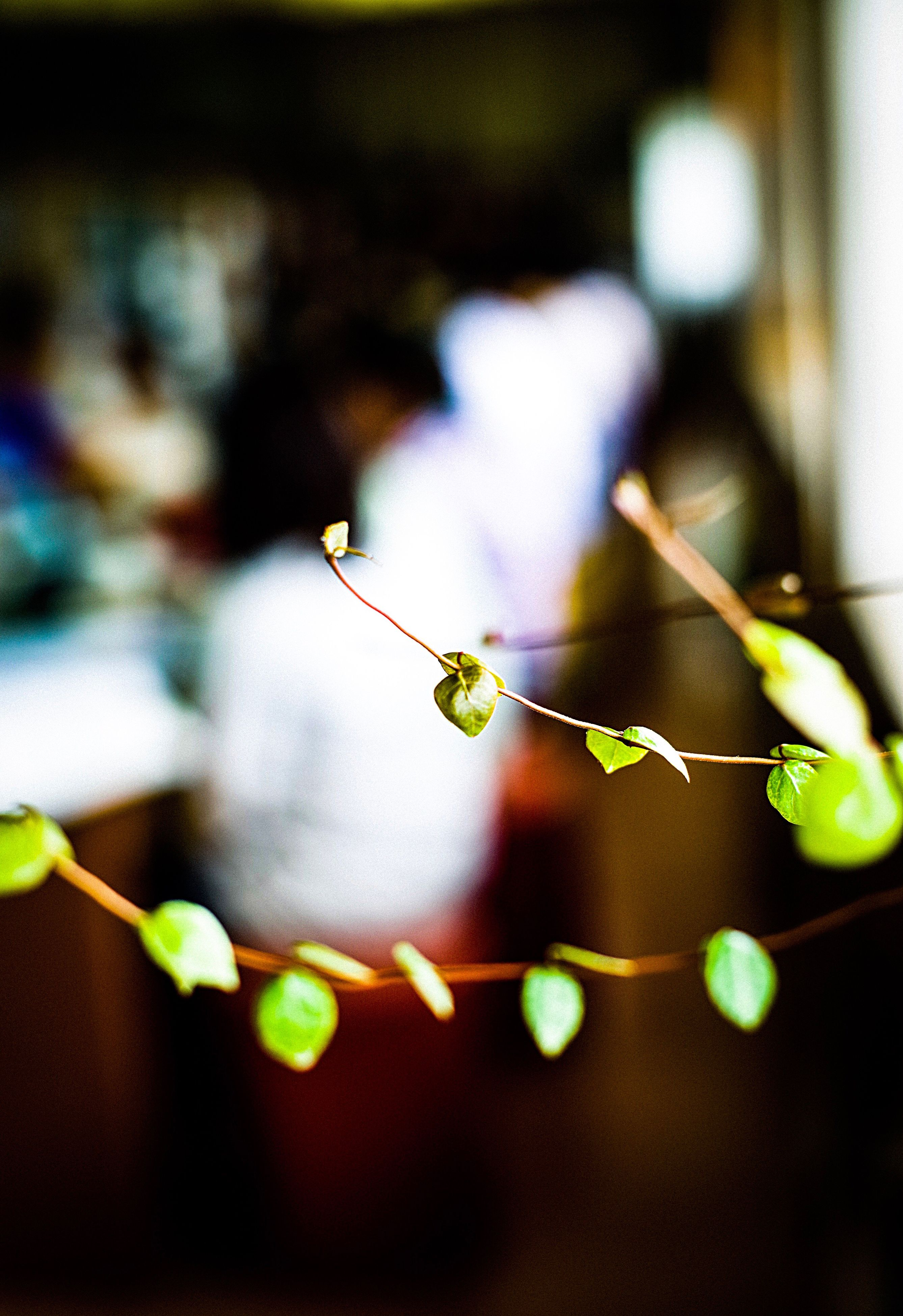 focus on foreground, growth, nature, close-up, plant, no people, fragility, outdoors, insect, beauty in nature, day, freshness, animal themes