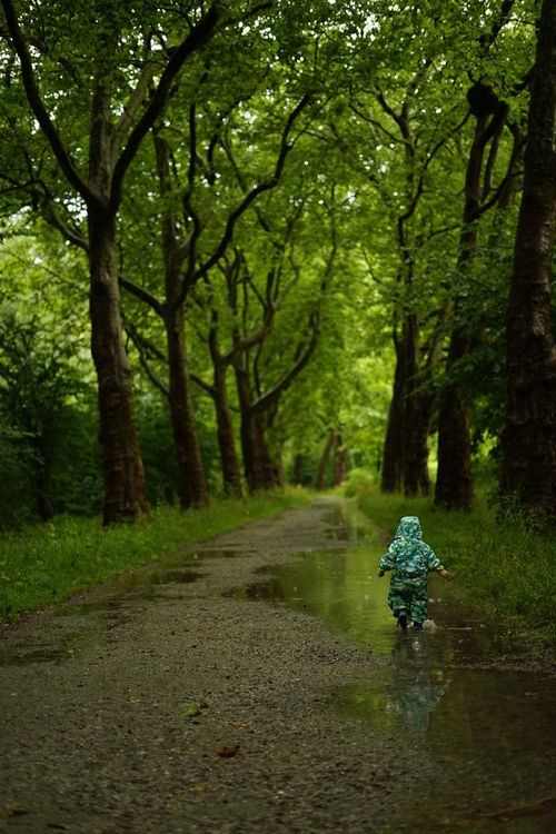 Childhood Explore Forest Germany Green Color Growth Idyllic Insel Mainau Joy Nature Outdoors Puddles Rain Tranquil Scene Tranquility Tree Trees Water