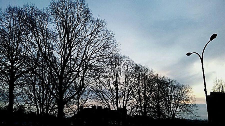 Au coucher du soleil, apparaissent les vrais visages. Ceux des démons..? Taking Photos Threes Paysage Urbain Demons Visages Photographie  Beautiful Nature Arbres Vire Wintertime