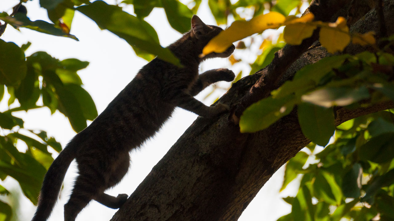 tree, branch, one animal, low angle view, no people, animal themes, mammal, day, side view, animals in the wild, outdoors, koala, nature, leaf, climbing, full length, close-up