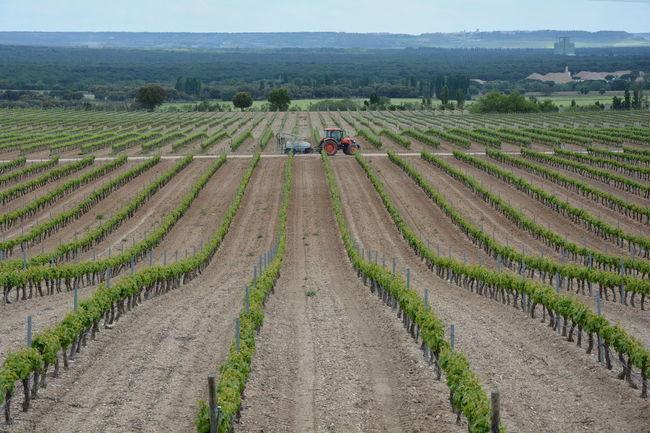 Vine vineyard tractor agriculture nature beauty landscape plants