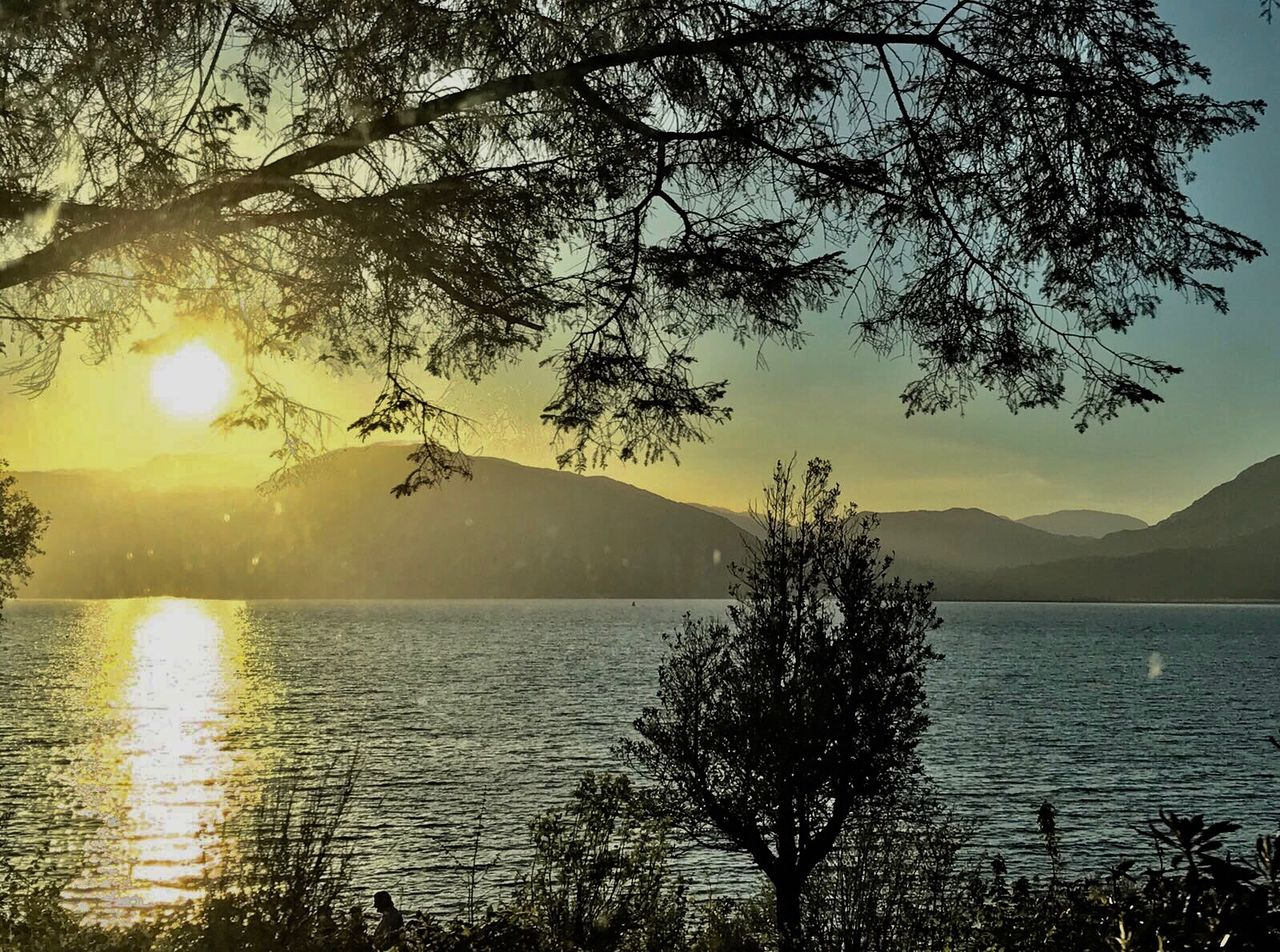 tree, water, beauty in nature, nature, scenics, tranquil scene, tranquility, sunset, sea, sky, branch, sun, growth, mountain, no people, outdoors, sunlight, foreground, silhouette, day