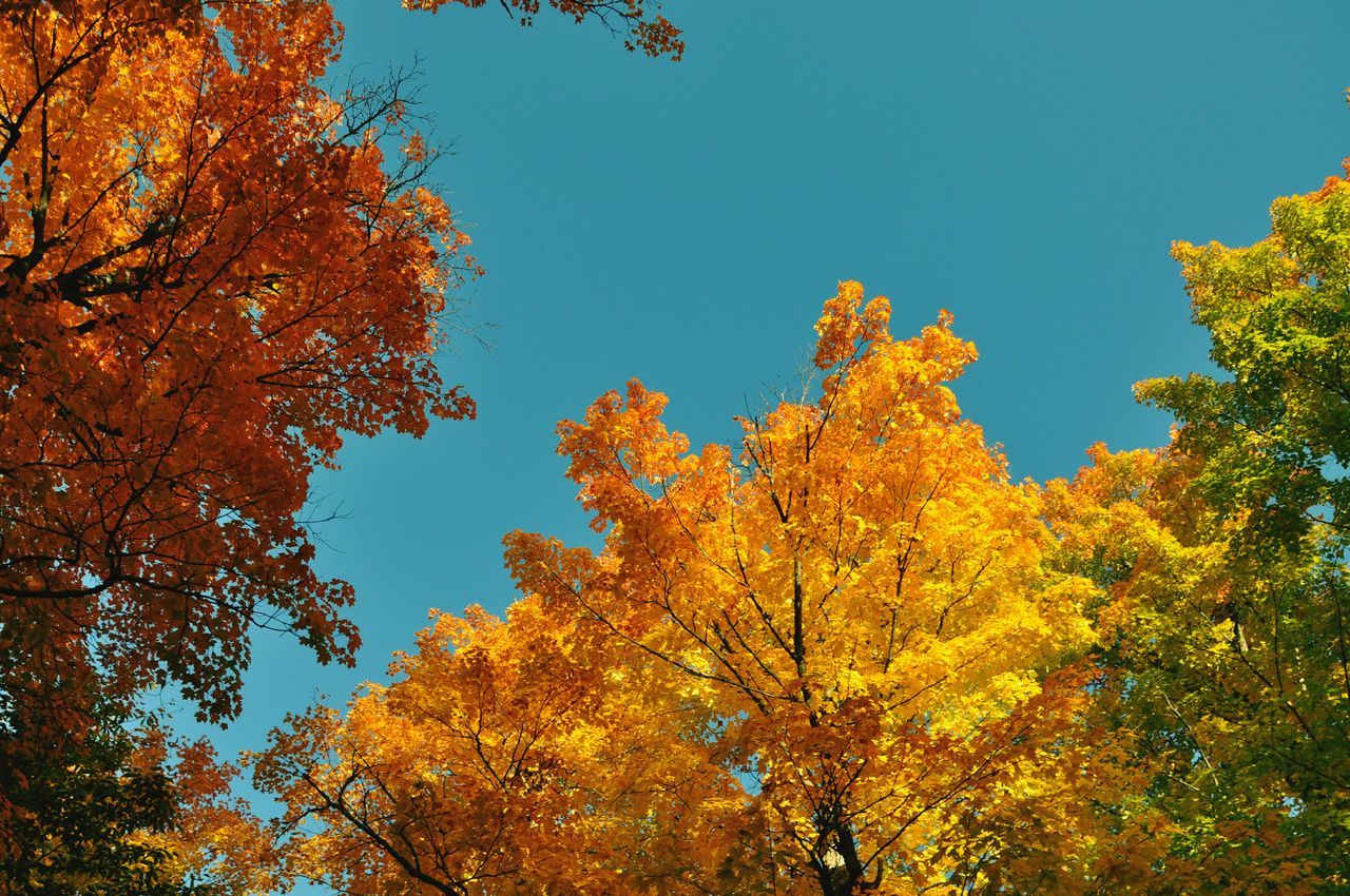 Indian Summer Autumn Beauty In Nature Tree And Sky Colourful Nature Red Green Yellow Colors Art Is Everywhere