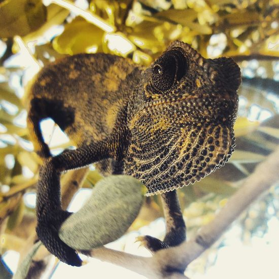 Taking Photos Check This Out Eye4photography  EyeEm Best Shots Matrix Lizard Lizetteanita Edit Photo Just Shoot.. Camping