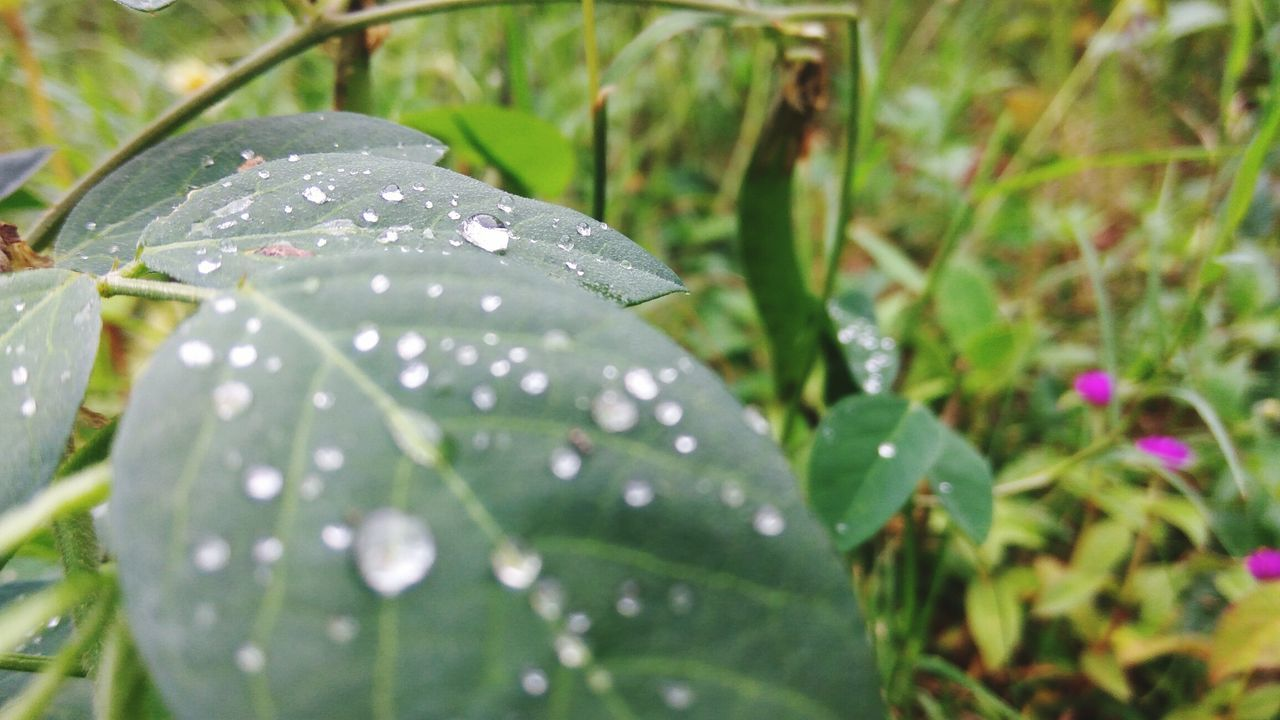 leaf, wet, drop, rain, nature, growth, water, fragility, beauty in nature, close-up, raindrop, plant, day, outdoors, no people, freshness