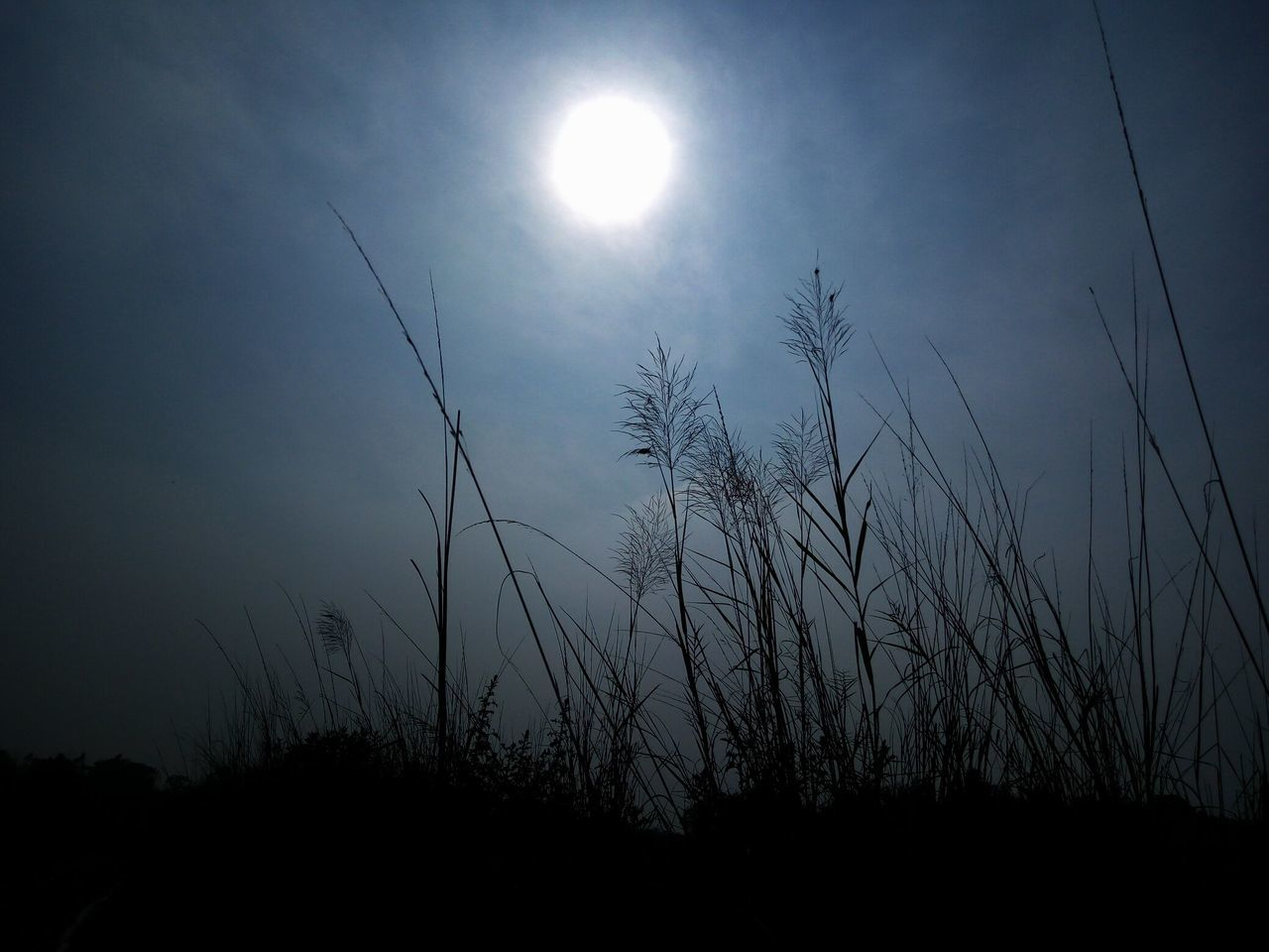 moon, sun, nature, beauty in nature, tranquil scene, tranquility, silhouette, scenics, outdoors, growth, sky, moonlight, no people, plant, low angle view, tree, grass, clear sky