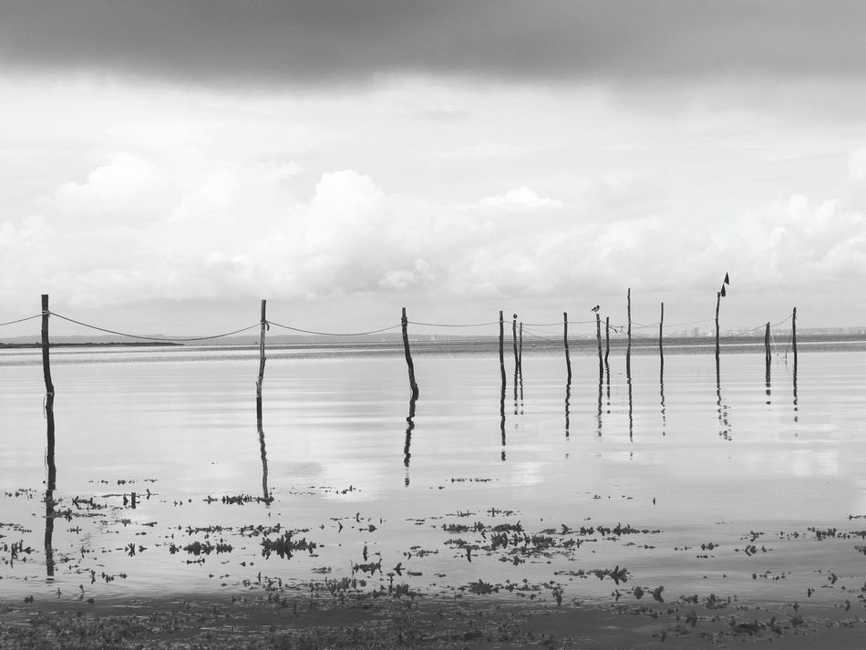 Calm Landscape_Collection Landscape Nature Photography Nature_collection Seaside Reflections In The Water Black And White Black & White Black And White Photography Wood - Material Bird Monochrome Reflection Calm Water Calmness Simplicity Minimalism Minimalobsession Canon Wooden Stakes Fine Art Photography Monochrome Photography