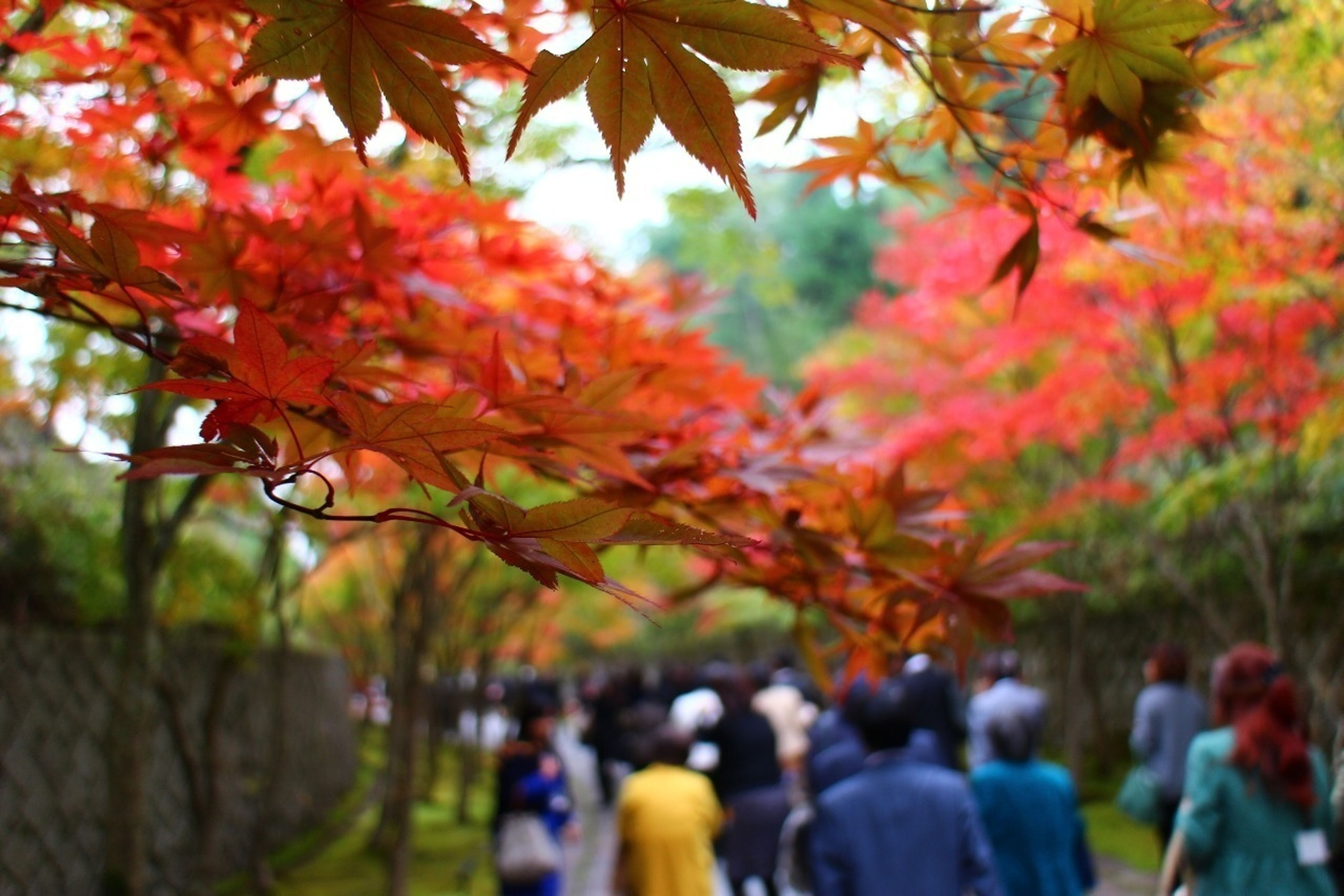 tree, branch, autumn, growth, leaf, lifestyles, leisure activity, park - man made space, nature, person, change, focus on foreground, men, day, large group of people, beauty in nature, outdoors, season, selective focus