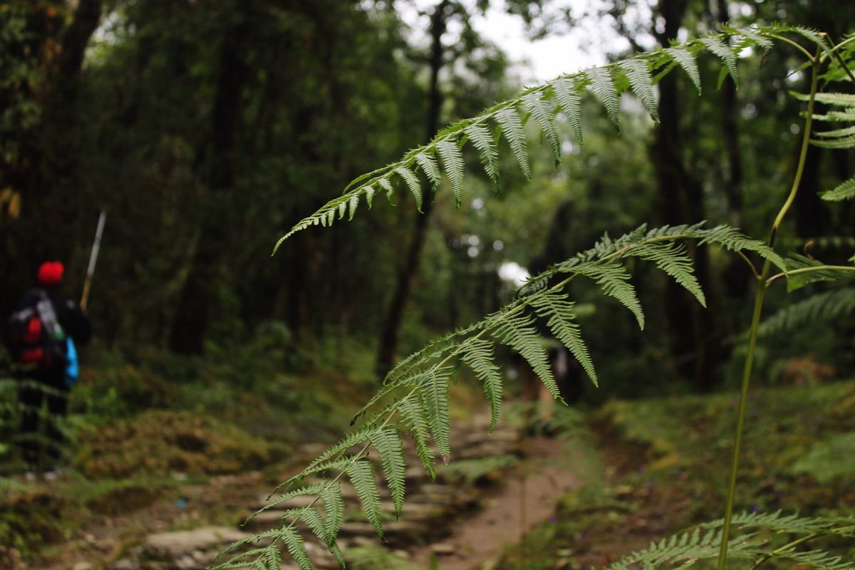 Fern Closer Me Walking Nature Photography Outdoors Edited On EyeEm