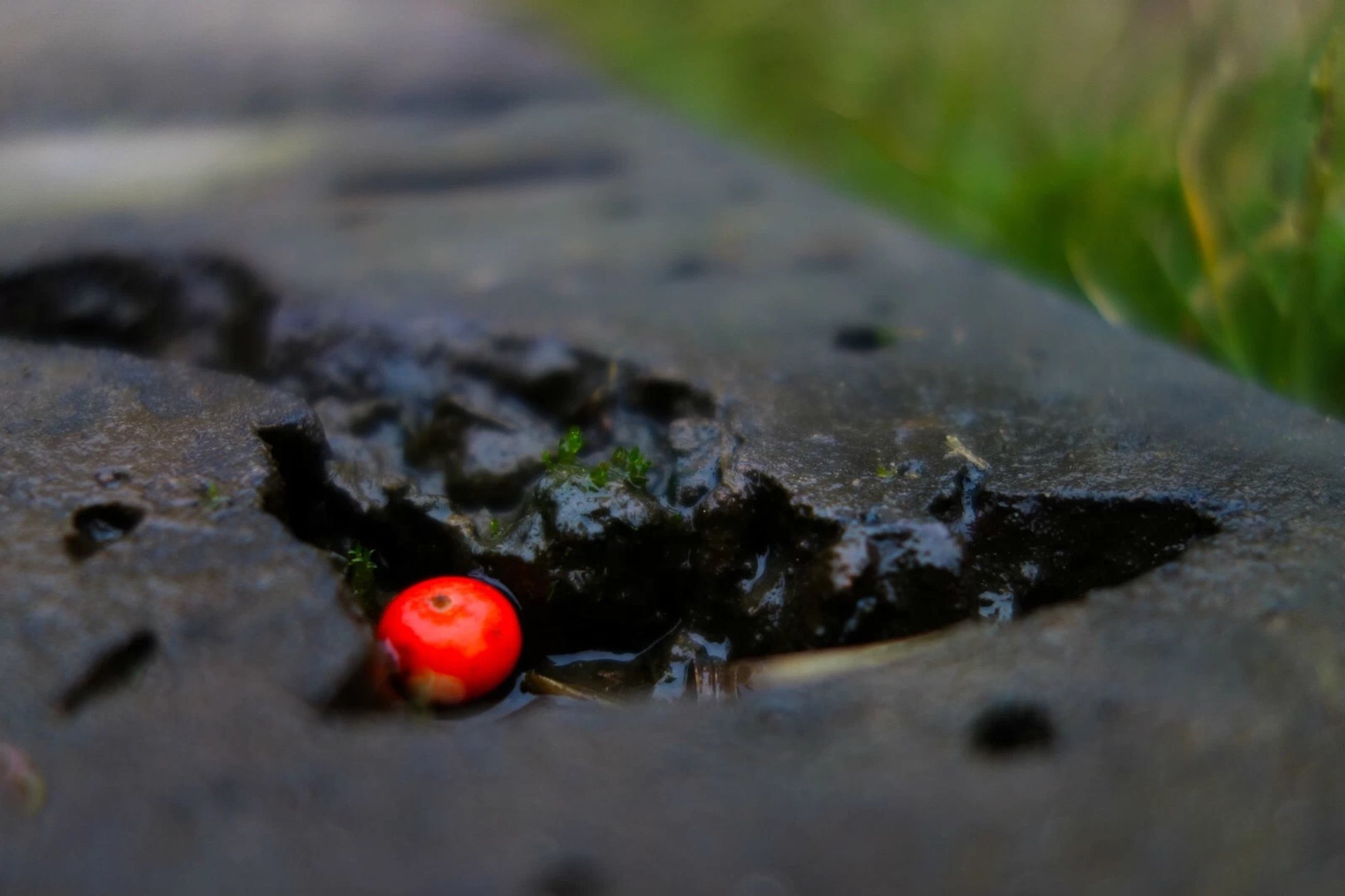 red, selective focus, close-up, focus on foreground, no people, nature, day, food and drink, damaged, insect, high angle view, fruit, abandoned, outdoors, still life, rock - object, food, surface level, textured, ladybug