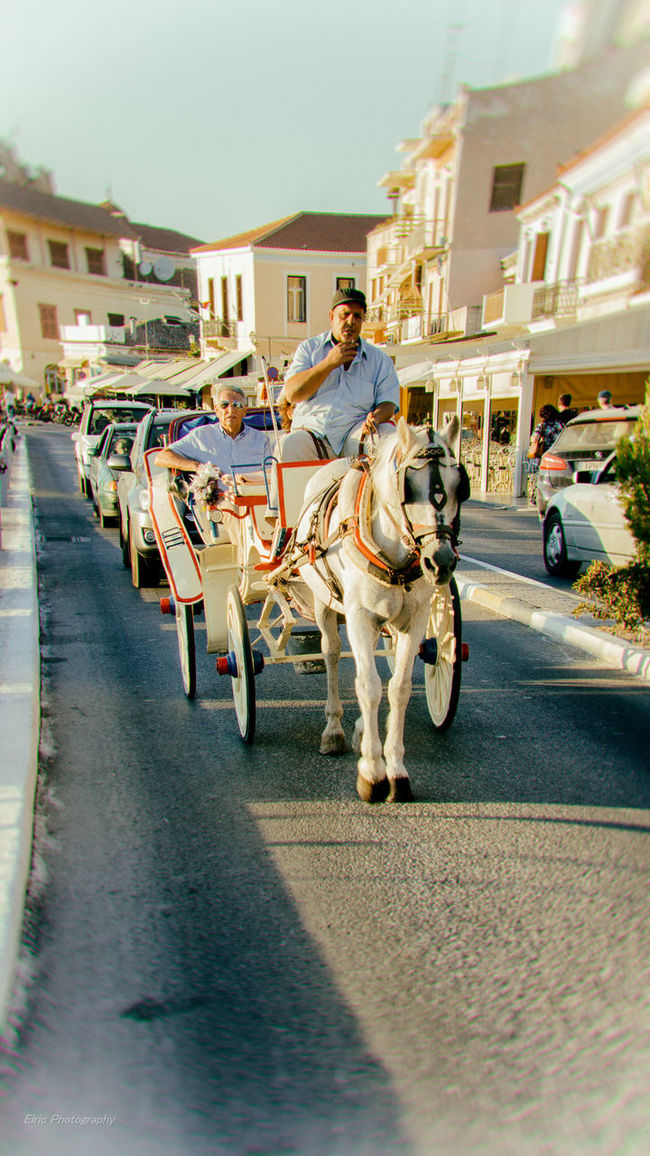 Distortion Distortion Greece Horse Aegina Greek Islands Sony A6000 18-105mm Experiment Enjoying Life Scenics Travel Destinations Hellas Taking Photos Tourist Resort Architecture Atmospheric Mood Animal